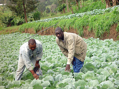 Sustainable Agricultural Intensification