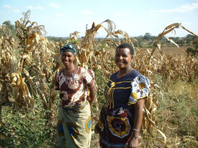 At Arusha, Tanzania, women farmers are participating in on-farm trials supported by ASARECA