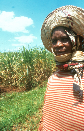 African Plantation Worker - copyright Real World Photography