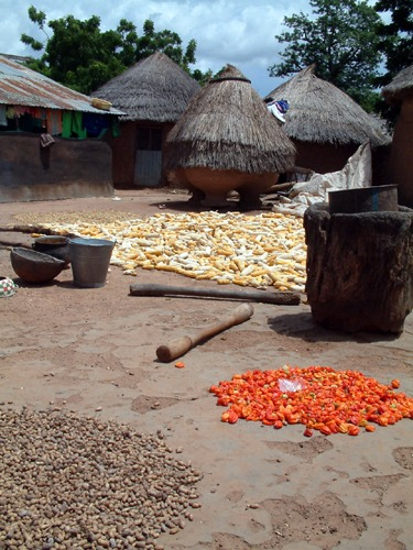 African households can gain a lot by reducing food losses