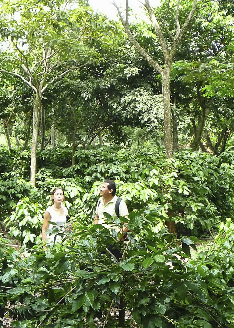 Farmers and researchers visiting a shaded coffee experiment in Nicaragua