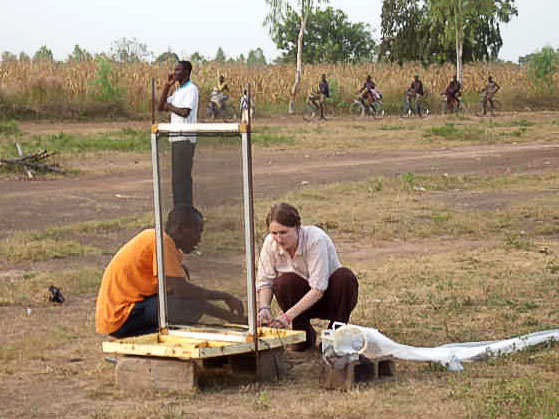 Frances and field assistant setting up an odour-baited electric net for overnight mosquito sampling in Burkina Faso
