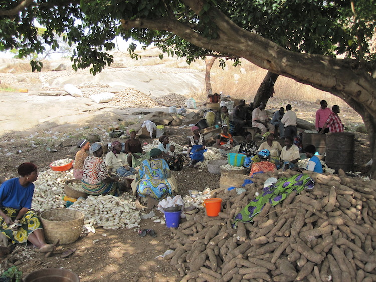 Women peeling yam in Oyo north in Nigeria, part of yam processing into chips