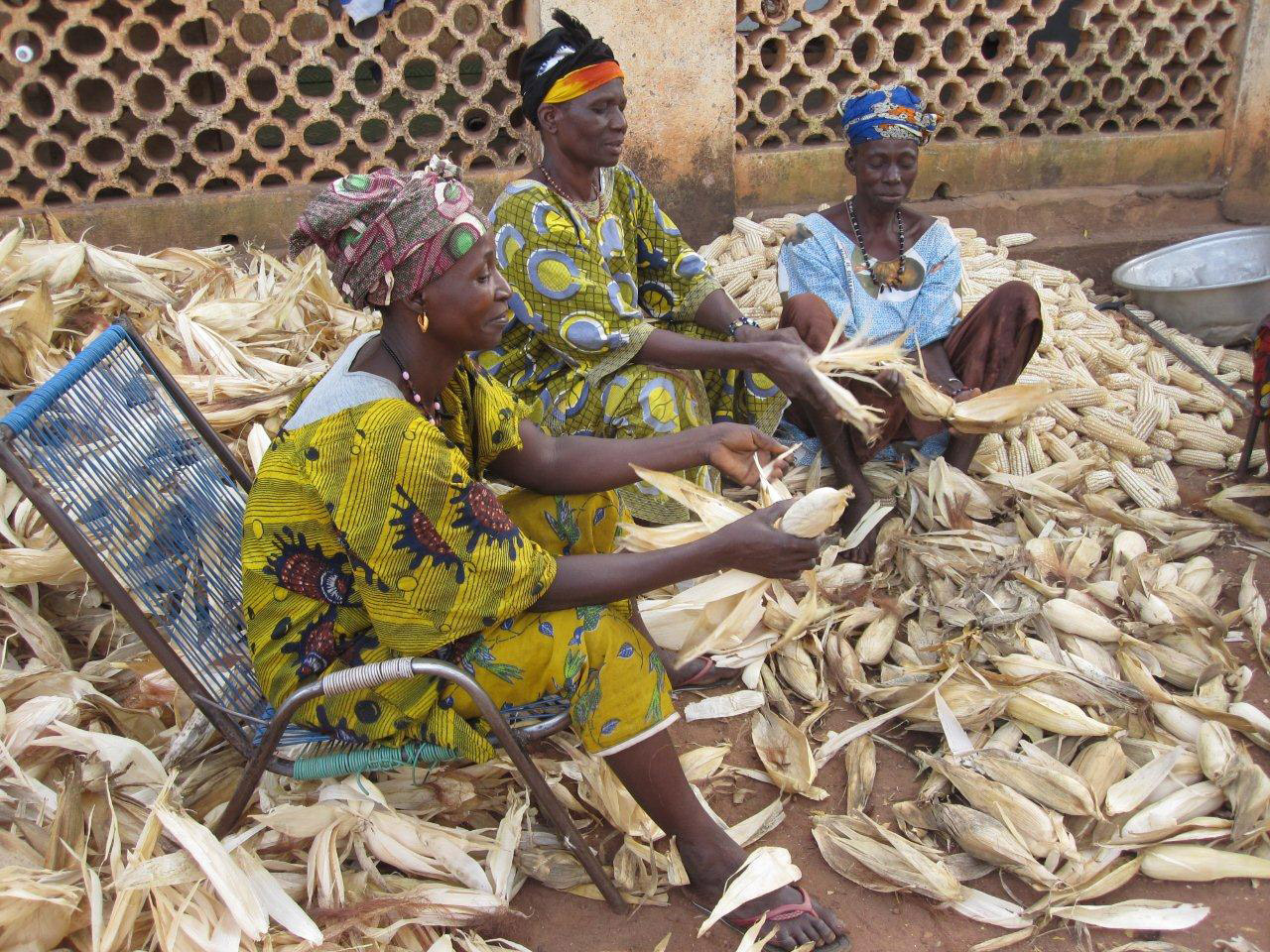 Women peeling maize
