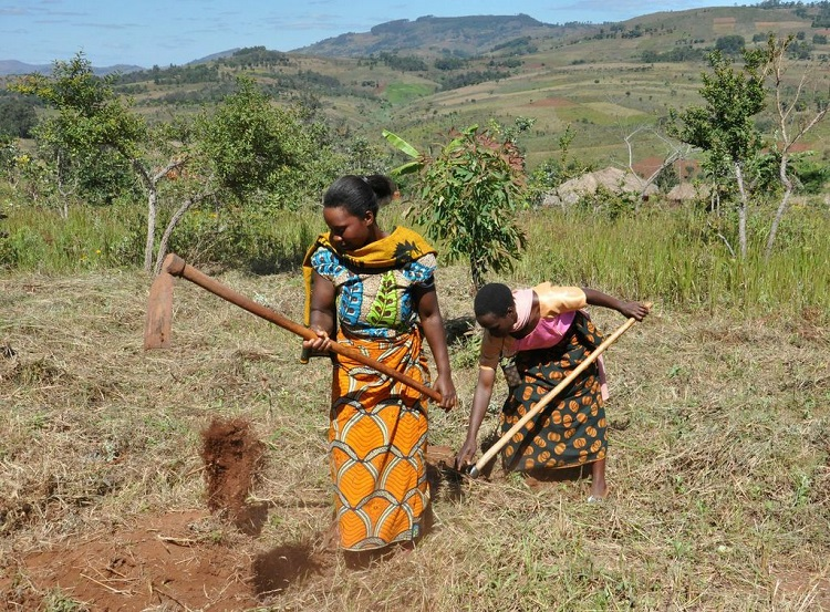 Women in Southern Tanzania demonstrating a traditional soil and water conservation technique. Photo: C Mungai